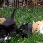子ウサギと一緒に、子猫たちがピョンピョン跳ねて遊ぶ♪ みんなきょうだいみたいで可愛い!