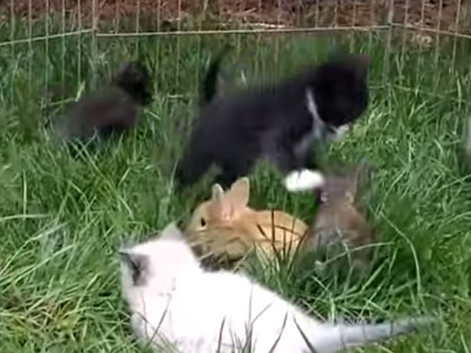 子ウサギみたいにピョンぴょんと跳ねる子猫1