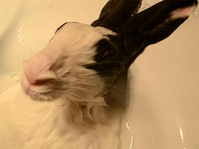 鼻をヒクヒクさせるウサギ
