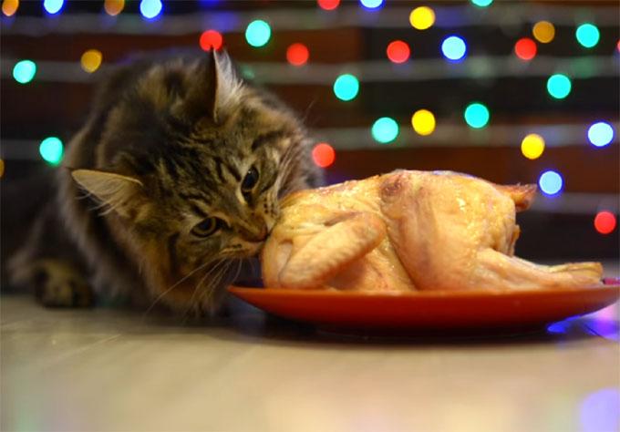 クリスマスのローストチキンを食べる猫