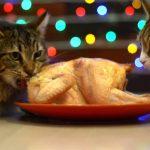 猫だってクリスマスを祝いたい! 丸鶏のローストチキンのご馳走が美味しいにゃ♪