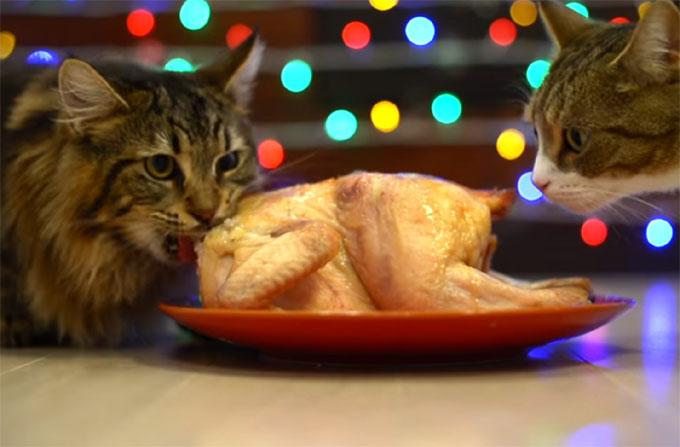 ローストチキンを食べる猫2