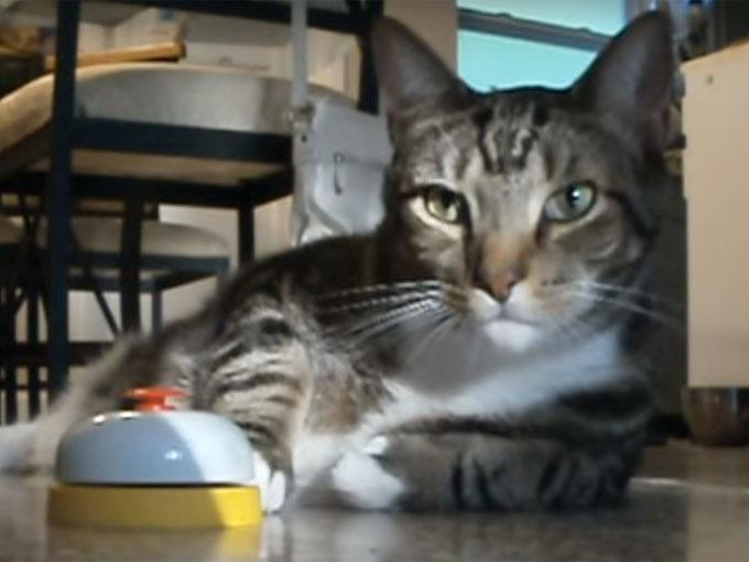 ベルを鳴らして見つめる猫