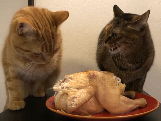 ローストチキンの前に二匹の猫