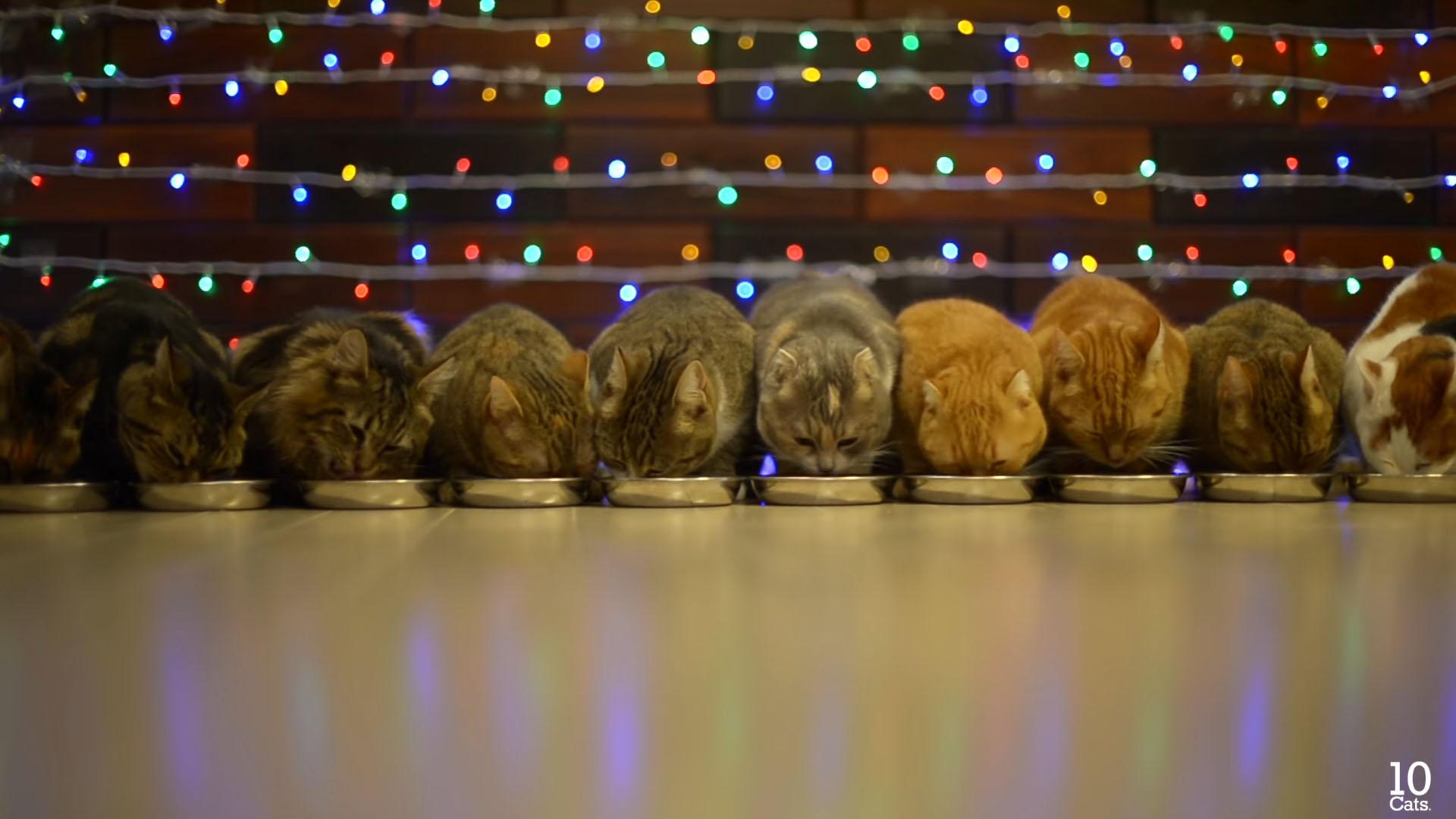 クリスマスを祝って食べる猫たち
