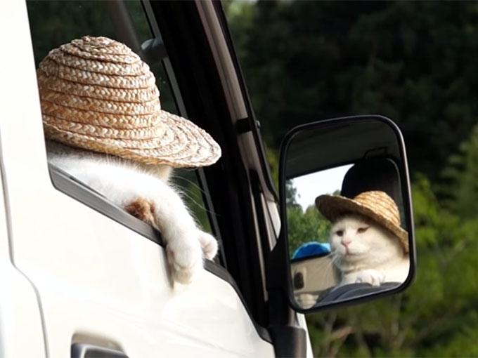 軽トラの窓に手を掛けて休憩する猫
