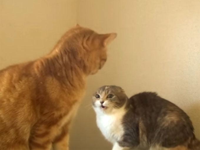 喧嘩しそうな二匹の猫