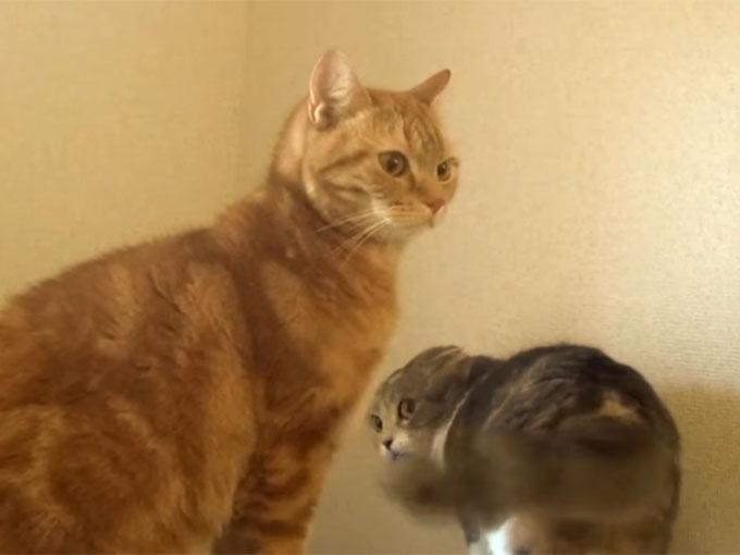 見なかったことにする猫