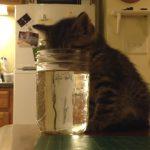 コップの水を飲みながら熟睡してしまった子猫! びっくりして起きた反応が可愛いすぎる♪
