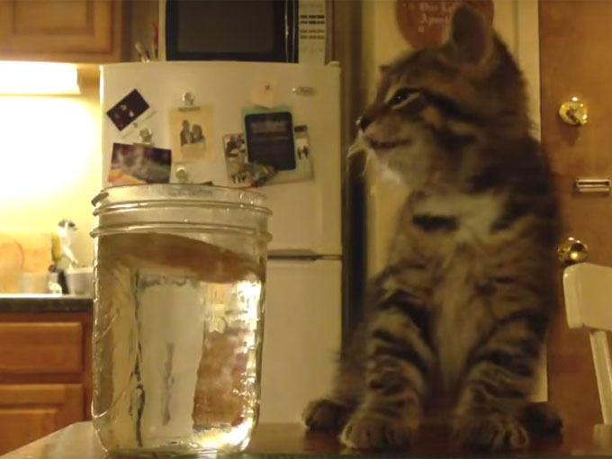 飼い主を睨む子猫