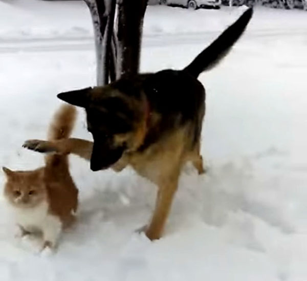 猫にちょっかいを出す犬