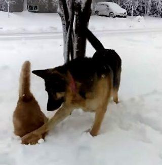 猫の顔ごと、雪にズボッ! 犬のお茶目なイタズラに爆笑♪