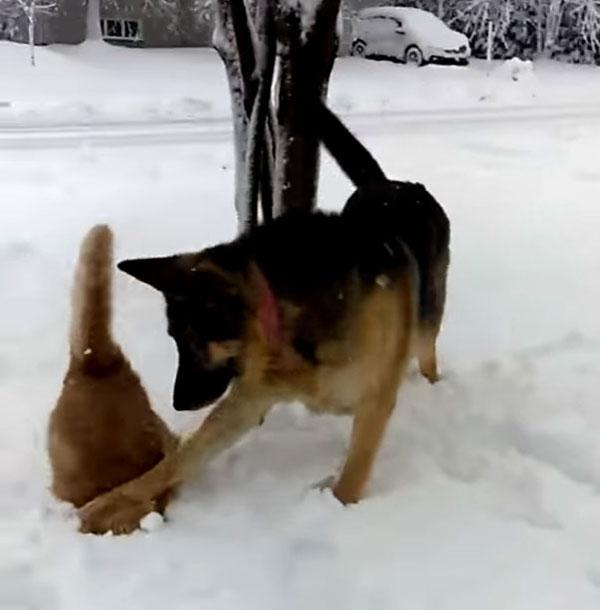 雪にズボッ!とされる猫