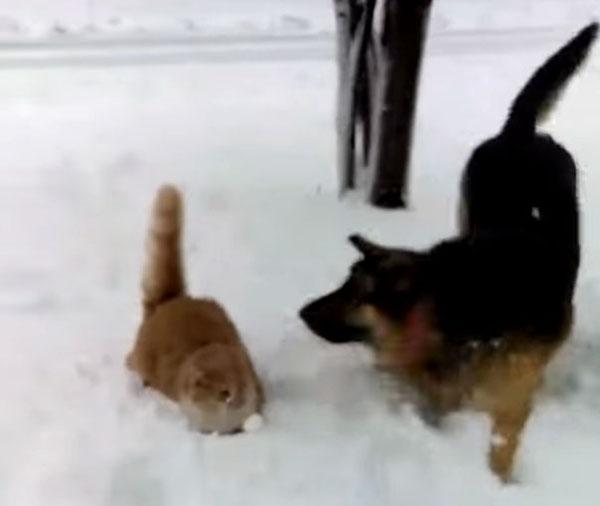 猫にイタズラをして逃げる犬