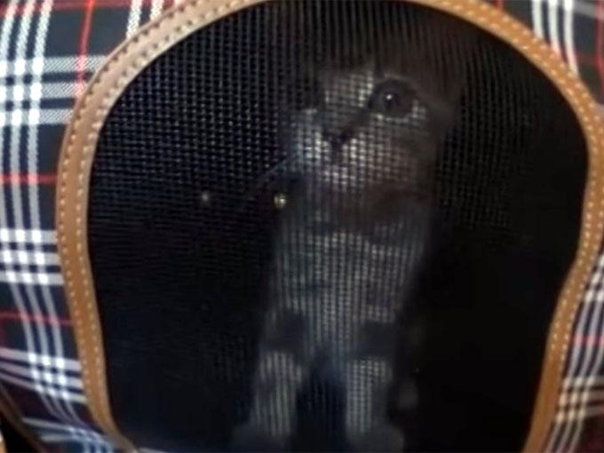 キャリーの中の子猫