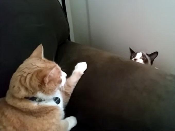 ソファの陰から、ゆっくり現れる猫