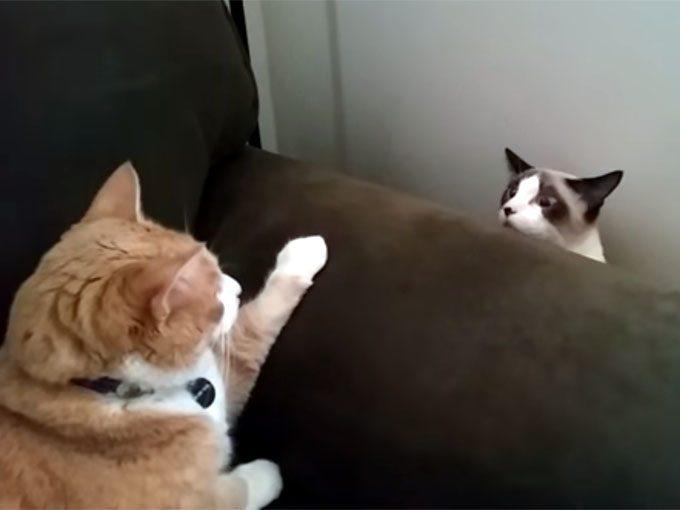 睨み合う二匹の猫