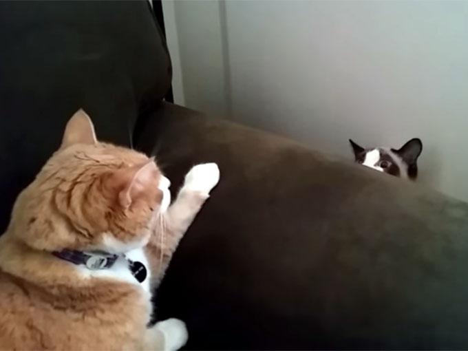ゆっくり沈み始める猫