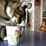 ミルクを舐める猫。それを見つめる犬。二匹の緊迫した空気が笑える!