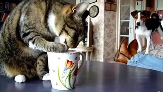 犬の視線を無視して、ミルクを舐める猫