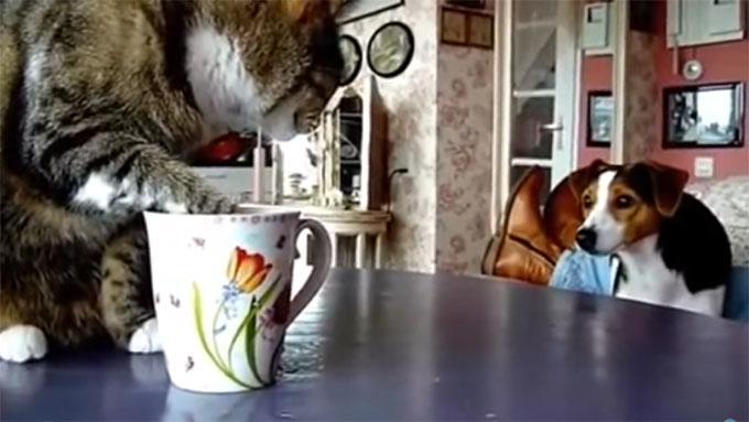 ミルクを舐める猫に近づいた犬