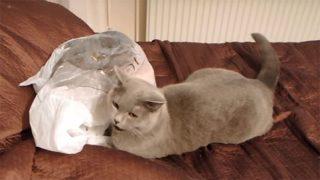 びっくり仰天! 油断していた猫が驚いて、すっ飛んだ距離が凄い!