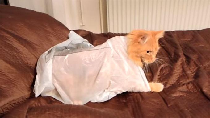 袋の中に残された猫