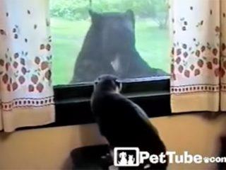 窓の外に何かいるニャ! 威嚇する猫の前に現れたのは、大きなクマさんでした!