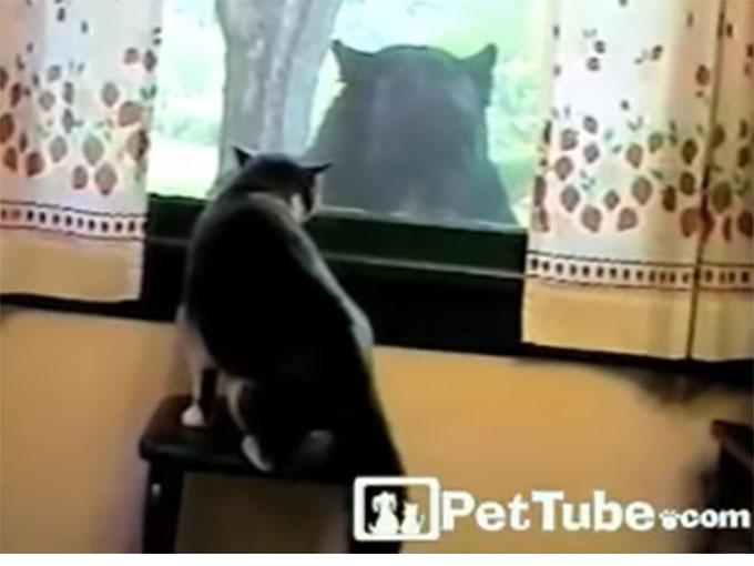 ビビリながら、クマを威嚇する猫