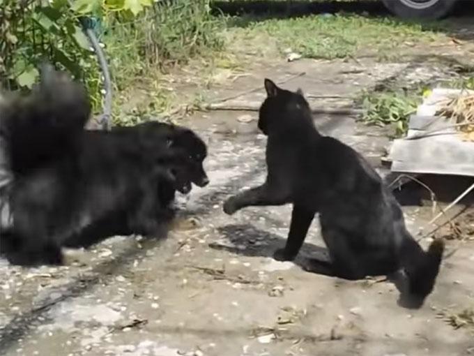 黒猫にちょっかいを出す犬