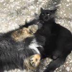 黒猫が犬に、プロレス技! 見事なスリーパーホールド!