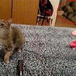 猫がクシャミしたら、別の猫が驚いて飛んだ! カトちゃん顔負けの爆笑動画!