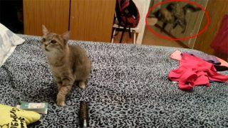 猫がクシャミした瞬間、別の猫が驚いて飛び上がる! カトちゃん顔負けの爆笑動画!