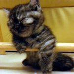 眠すぎる子猫!フラフラの姿が可笑しい♪