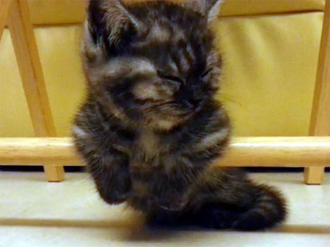 棒につかまったまま寝る子猫2