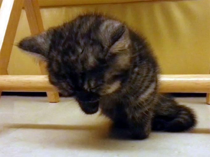 棒につかまったまま寝る子猫3