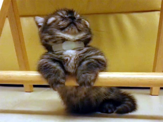 棒につかまったまま寝る子猫4