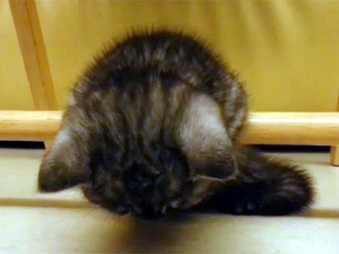 棒につかまったまま寝る子猫5