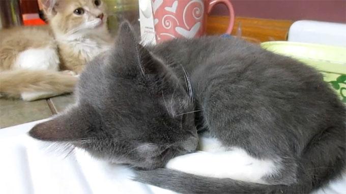 弟猫のイビキの音に驚く兄猫