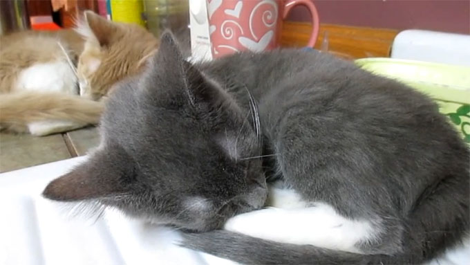寝ている兄弟猫