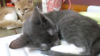 弟猫のイビキがうるさいニャ! 兄猫がイラッとしている様子に笑えます♪