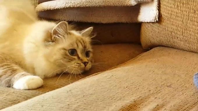 びっくりした猫