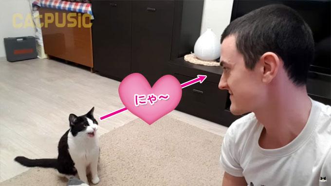 飼い主と目が合うと鳴く猫