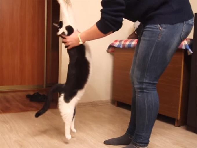抱っこをおねだりする猫