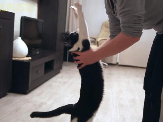 猫のバンザイポーズ