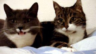 猫語の仲睦まじい会話が可愛い! 「ニャー」「ニャン」と仲良く鳴き合っています♪
