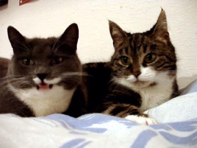 猫語で鳴き合う二匹の猫