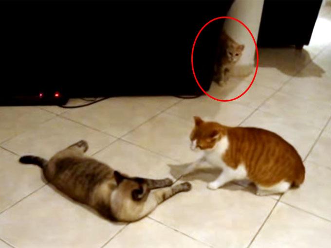 ケンカ中に、もう一匹の猫が現れる