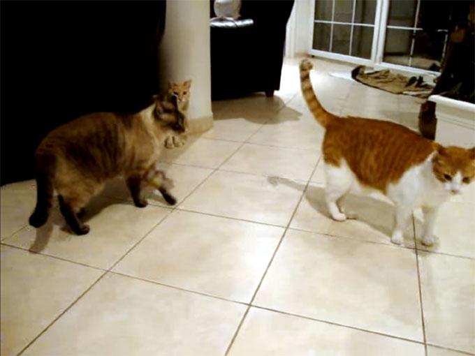 逃げる茶猫