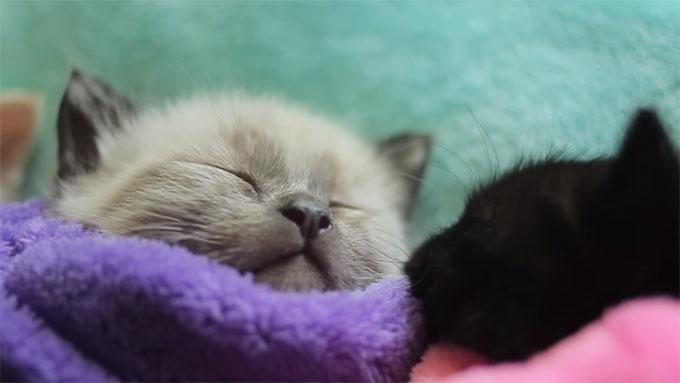 子猫の可愛い鼻